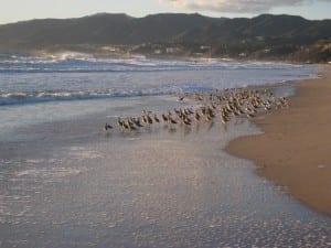 Talvella ranta on hiljainen.